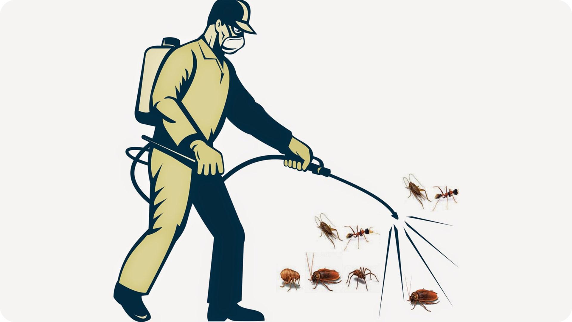 Top 10 địa chỉ cung cấp dịch vụ diệt ruồi, muỗi, côn trùng hiện nay
